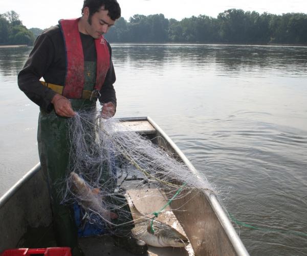 Nicolas remontant des poissons